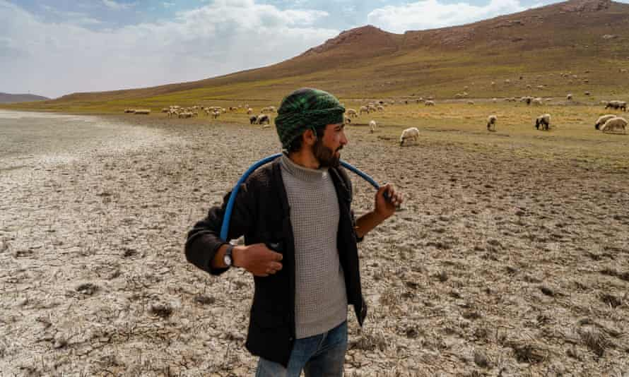 'We used to swim here': Yakup, 20, with his herd sheep in Lake Akgol, eastern Turkey