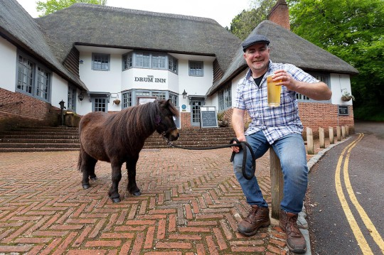 PIC: MARK PASSMORE/APEX 07/10/2021 BRITAIN'S most famous pint supping pony may no longer call in at his favourite pub after time was called by authorities. Patrick the miniature Shetland pony became a celebrity at The Drum Inn at picturesque Cockington in Torquay, Devon where his favourite tipple is Guinness. But that could end as Patrick and other horses which pull carriages through the thatched cottages and parkland are being removed following a long-running battle over grazing. Landlords Torbay Council said they were deeply saddened that despite all of their efforts the horses were being removed. They said they offered a peppercorn rent and business support and will continue to work to keep the heritage tradition of horses in Cockington. Patrick the miniature Shetland pony had become a celebrity at his local where the regulars don't bat an eyelid anymore when he trotted through the door of the village inn. Pictured: Patrick the pony enjoying a drink with owner Kirk Petrakis at the Drum Inn, Cockignton, Devon. ** SEE STORY BY APEX NEWS - 01392 823144 ** ---------------------------------------------------- APEX NEWS AND PICTURES NEWS DESK: 01392 823144 PICTURE DESK: 01392 823145
