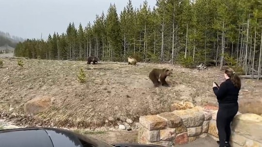 Samantha Dehring, 25, admitted a charge of wilfully remaining, approaching, and photographing wildlife within 100 yards at Yellowstone National Park.