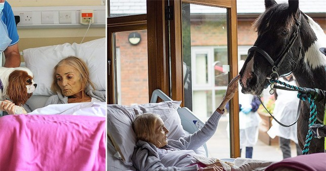 Dying woman given chance to say goodbye to her horse and dogs from hospice bed