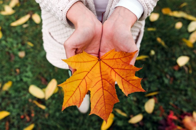 Girl holding leaf Getty images