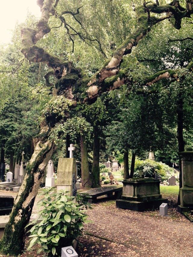 Algemene Begraafplaats Maastricht | Niet van deze Wereld | Dyamos