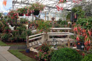 Afbeelding met buiten, bloem, gras, gebouw Automatisch gegenereerde beschrijving