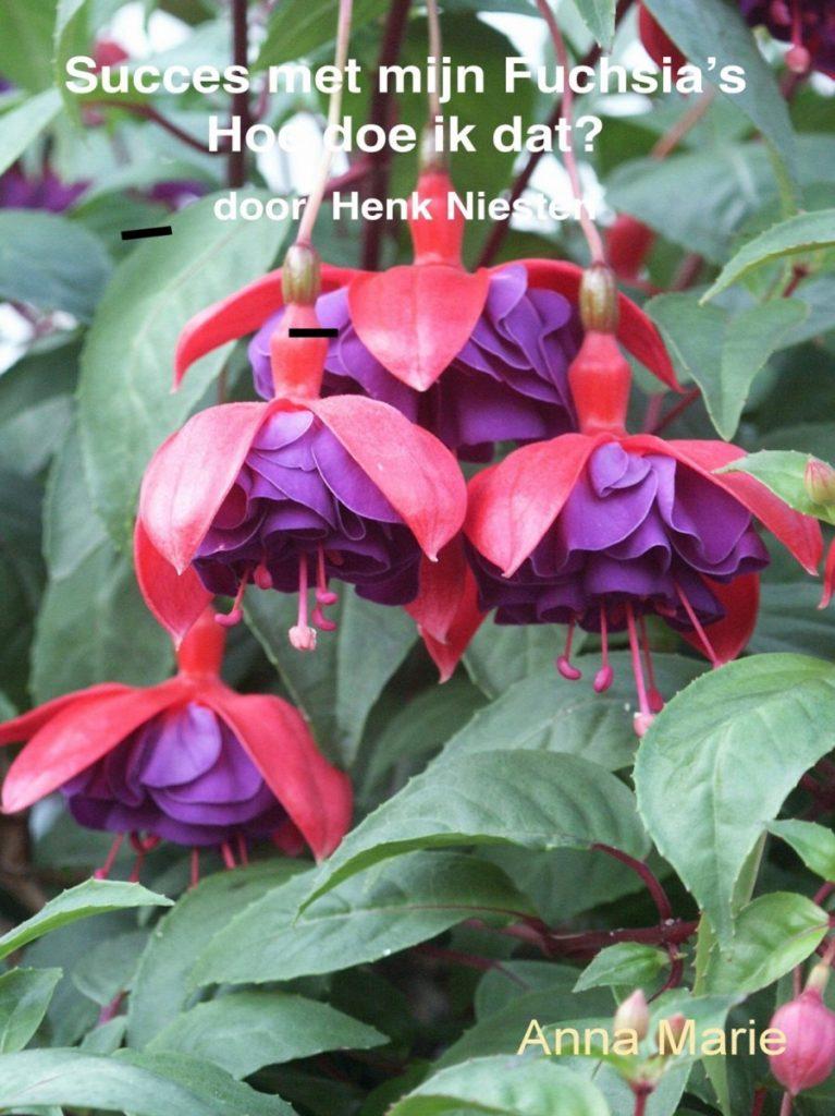 Afbeelding met plant, bloem, tafel, gevuld Automatisch gegenereerde beschrijving