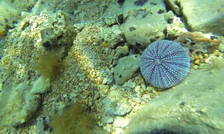 dyka på korcula