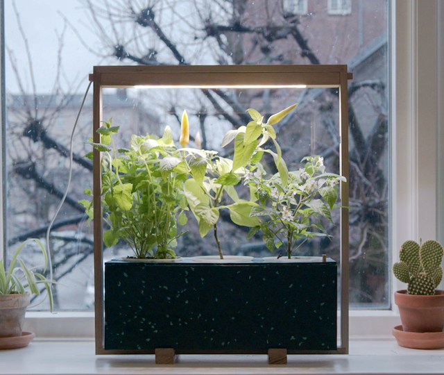 fresh herbs in your home