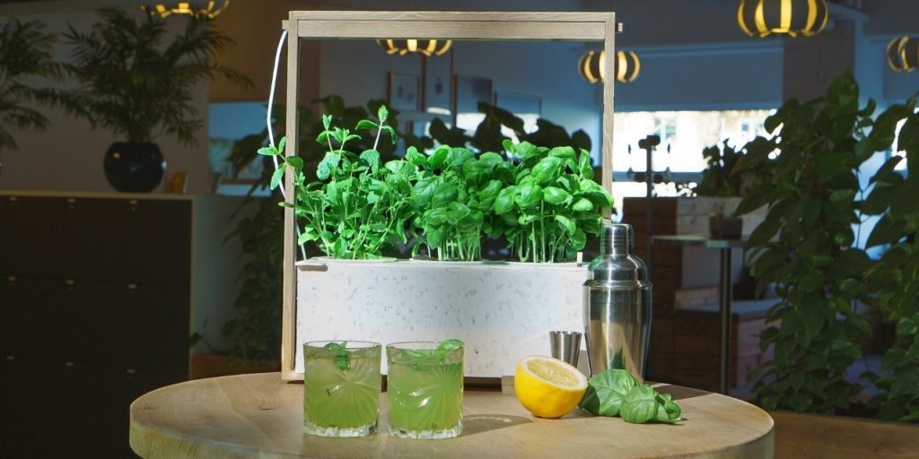 summer drinks with herbs