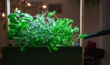 benefits of growing herbs