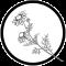 Nordic Wildcrafting Academy