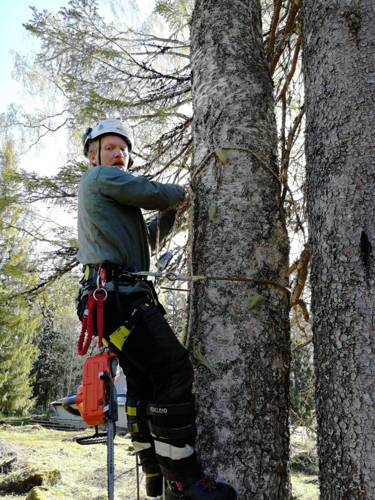 Harald Kravik ansvarlig beskjæring og stubbefresing