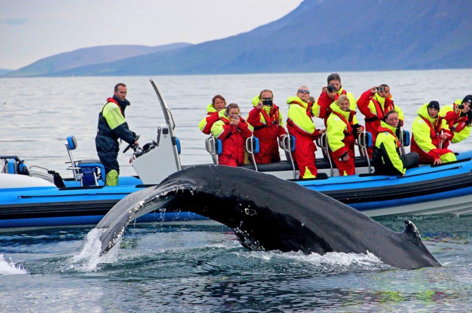 Med RIB båd kommer du meget tæt på havets store kæmper. North Travel.