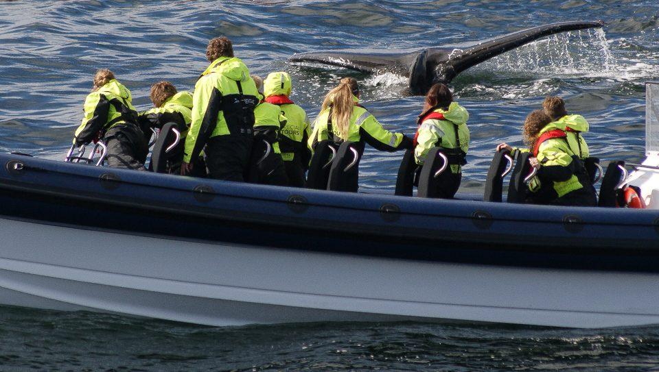 Oplev havets kæmper på nært hold. RIB safari fra Reykjavik. North Travel.