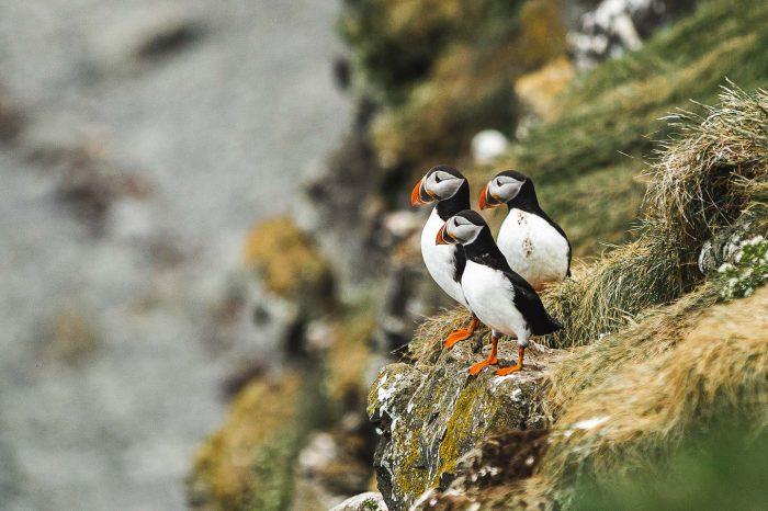 Studietur til Island – den gode