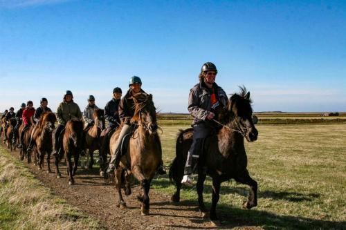 Islænderen har 5 gangarter. Prøv tølt på en rideferie i Island med North Travel.