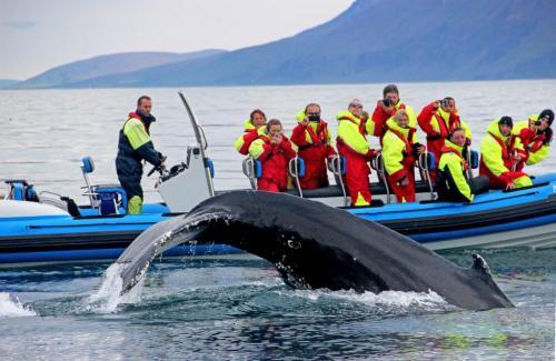 Med RIB båd fra Húsavík