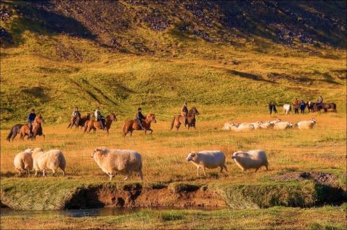 Rideferie i Island