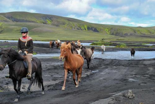 De smukke islændere på vej over Hólmsá