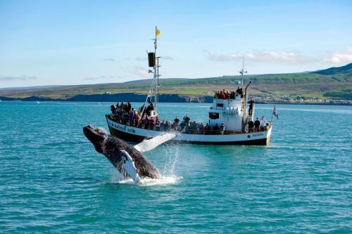 Den originale hvalsafari fra Húsavík