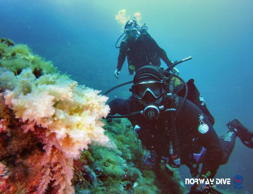 First Dive of 2018 – May 1st 2018