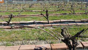 vingård domaine nyballe