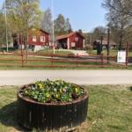 Blomrabatt i förgrund. Husby gård i bakgrunden, solig sommardag.
