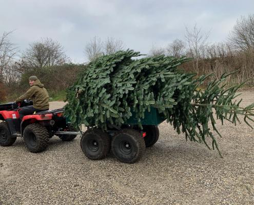 juletræer i alle størrelser.