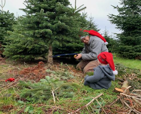 far og søn fælder juletræ sammen.jpg