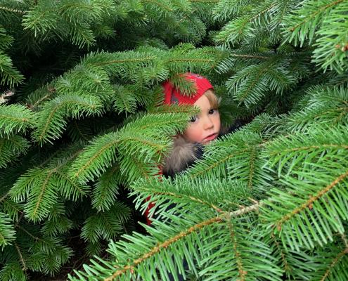 gemmeleg i juletræerne