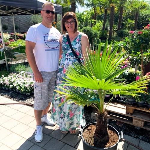 Winactie | Palmboom 2020