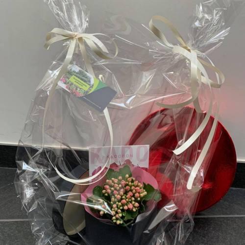 Cadeaubon   Set met doosje en accessoire (Kalanchoë)