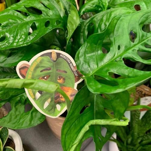 kamerplanten-3