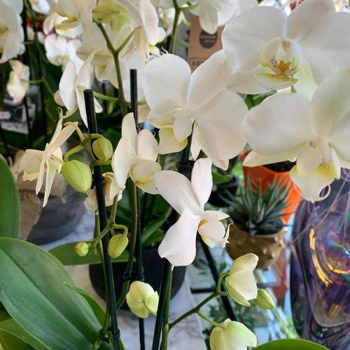 Orchideeën-1