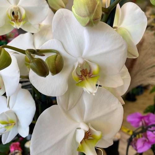 Orchideeën-2