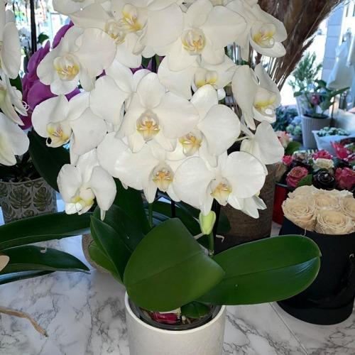 Orchideeën-4