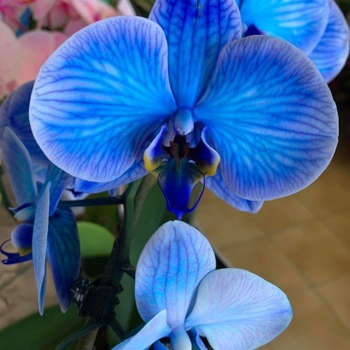 Orchideeën-5