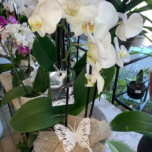 Orchideeën-6