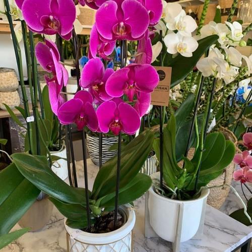 Orchideeën-8