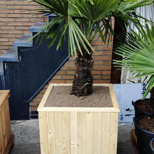 bak-hout-palmboom-middel