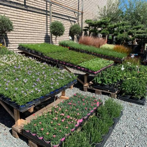 Assortiment vaste planten