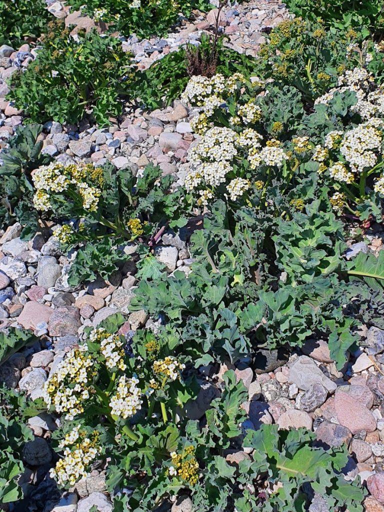 Vandretur på Helnæs