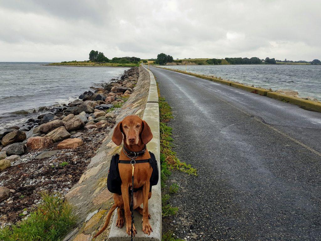 Vandretur på sydfynske øer