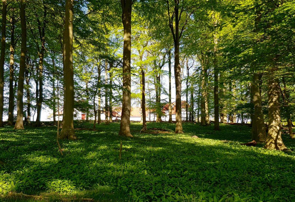 Æbeløgaard