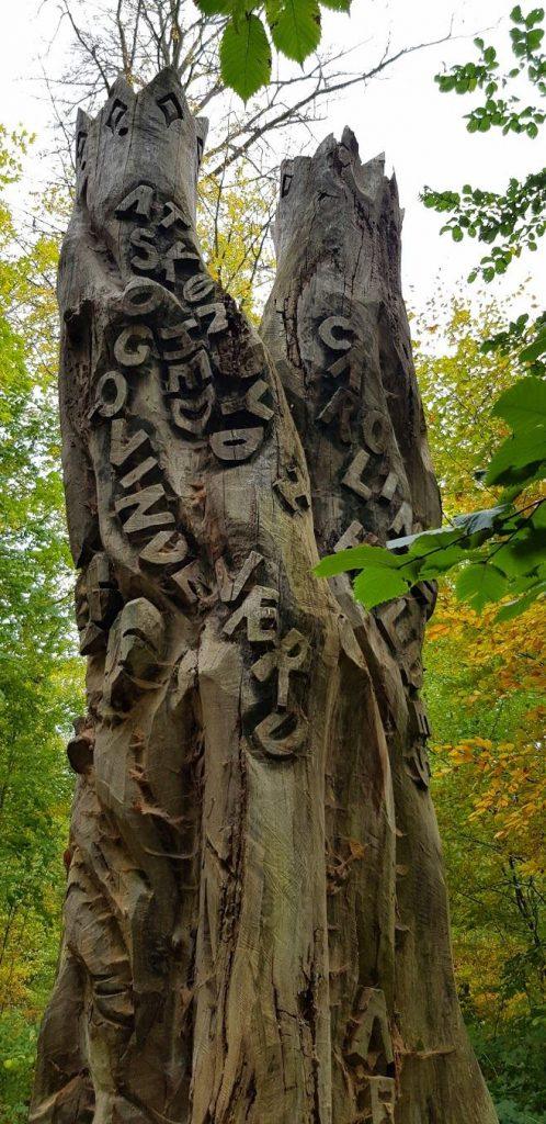 Carolinekilden - elmetræet