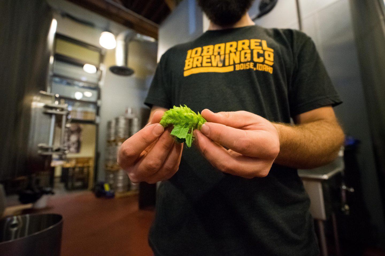 En ølbrygger med en grønn humleblomst i hånda.