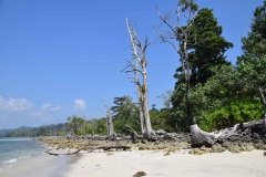Elefant Beach - Havelock Island - India - 2018 - Foto: Ole Holbech