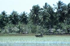 Kumana – Sri Lanka – 1983 - Foto: Ole Holbech