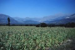 Peloponnes - Greece - 1979 - Foto: Ole Holbech