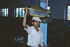 Wewessa Tea Factory - Badulla - Sri Lanka - 1983 - Foto: Ole Holbech