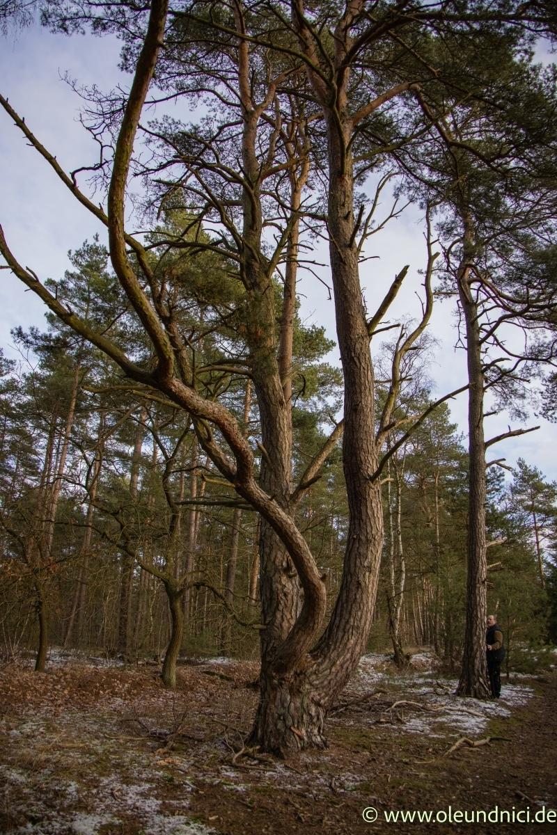 bäume blumen und gegend  nici´s fotoseite