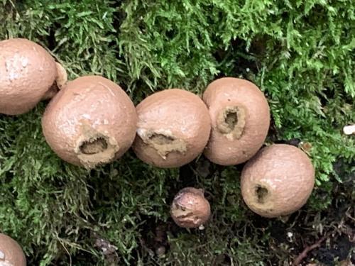 Bijzondere paddenstoelen dit jaar